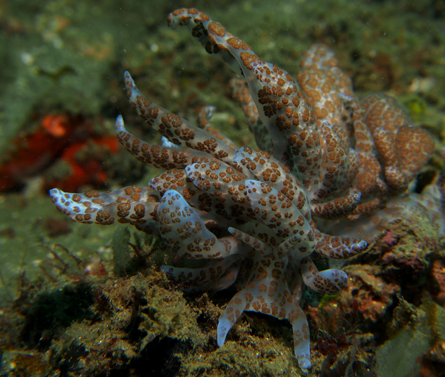 Nudibranch - Don't know the name/type